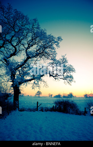 Christmas in England Smallwood Cheshire landscape with trees and fields abstract colourful colorful views - Stock Photo