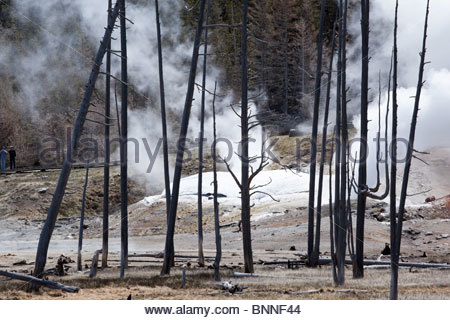 Dead Trees and Black Growler Steam Vent at Norris Geyser Basin, Yellowstone National Park, Wyoming - Stock Photo