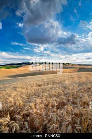 Clouds and wheat field. The Palouse, Washington - Stock Photo