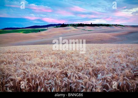 Sunset and wheat field. The Palouse, Washington - Stock Photo
