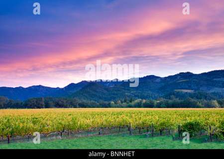 Sunrise over Napa Valley vineyard with fall color. California - Stock Photo
