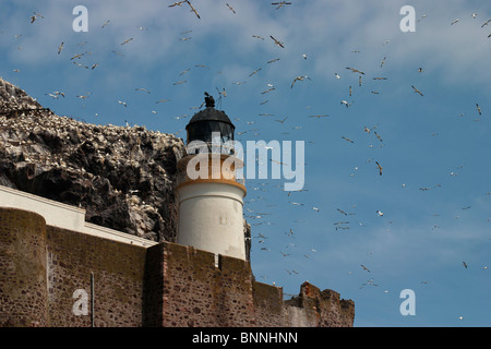 Lighthouse on Bass Rock off the coast of Scotland where Northern Gannets return each year to breed. - Stock Photo