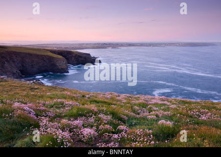 Pink Sea Thrift wildflowers flowering on the clifftops at Trevose Head, Cornwall, England. Spring (May) 2009 - Stock Photo