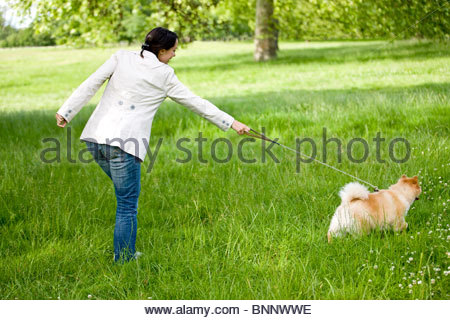 A young woman being pulled along by her dog - Stock Photo