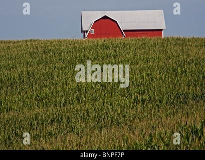 Albion, Michigan - A barn and corn field in rural Michigan. - Stock Photo