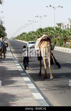 Boy leading camel in Sharm el Sheikh, Egypt - Stock Photo