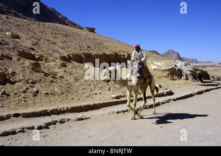 The ship of the desert, A Bedouin and his camel on the desert road close to The Monastery of St Catherine in Sinai. - Stock Photo