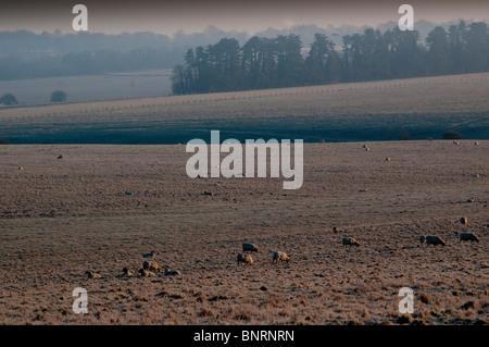 europe; UK, england, wiltshire, Salisbury Plain winter landscape - Stock Photo