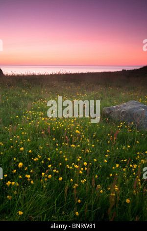 Summer on the island Runde on the Norwegian west coast. - Stock Photo