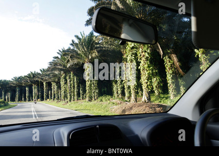 Driving through oil palm estate in Malaysia - Stock Photo