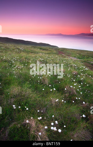 Cotton weed and colorful skies at dusk on the island Runde in Herøy kommune, Møre og Romsdal fylke, west coast of - Stock Photo