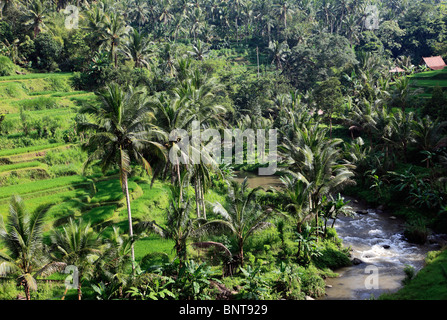Indonesia, Bali, Sayan, Ayung River Valley, landscape, - Stock Photo