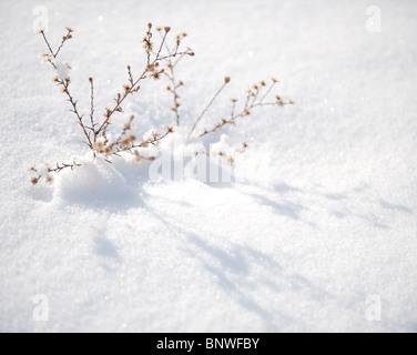 Macro of snow covered desert plants. - Stock Photo