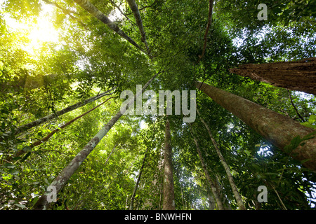 low angle dynamic view of tropical rainforest in tioman island, malaysia - Stock Photo