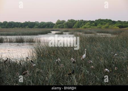 Heron rookery in Lake, Fennessey Ranch, Refugio, Corpus Christi, Coastal Bend, Texas Coast, USA - Stock Photo