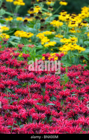 Monarda 'Gardenview Scarlet'. Bergamot 'Gardenview Scarlet' in an english garden flower border. UK - Stock Photo