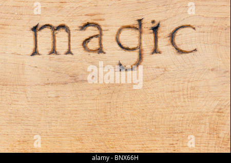 Wooden garden bench carved with the word 'Magic' at RHS Harlow Carr - Stock Photo