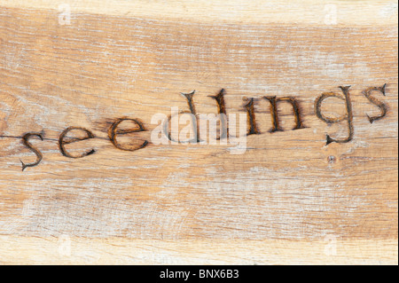 Wooden garden bench carved with the word 'seedlings' at RHS Harlow Carr - Stock Photo