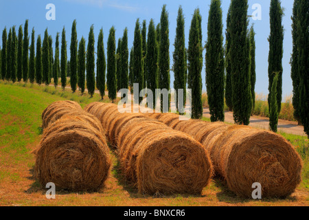 Hay bales and cypresses in the Tuscan countryside of Italy - Stock Photo