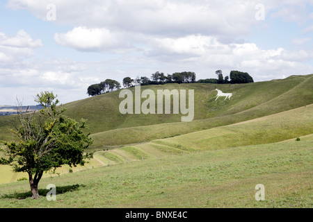 Views of the Cherhill White Horse, Wiltshire. - Stock Photo
