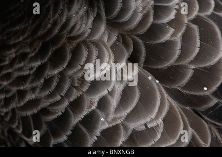 Bird's feathers, close-up - Stock Photo