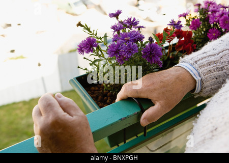 Standing on balcony, blooming flowers in window box - Stock Photo
