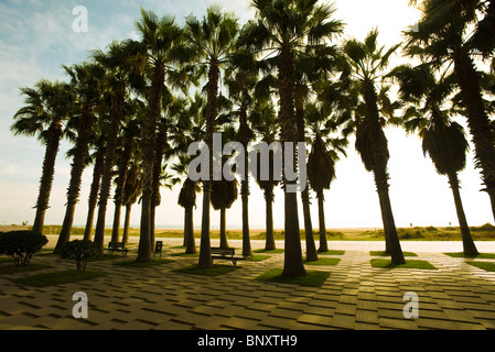 Palm trees in seaside park - Stock Photo
