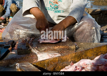 Morocco, Essaouira, fish being prepared at the port - Stock Photo