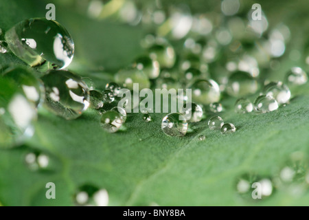 Water droplets on cabbage leaf - Stock Photo