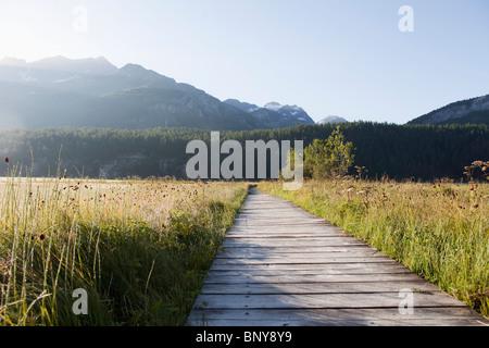 Wooden path through green grass - Stock Photo