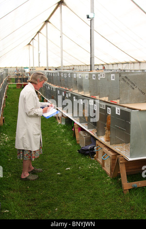 Judging poultry at the Bakewell Show, Bakewell, Derbyshire, England, U.K. - Stock Photo
