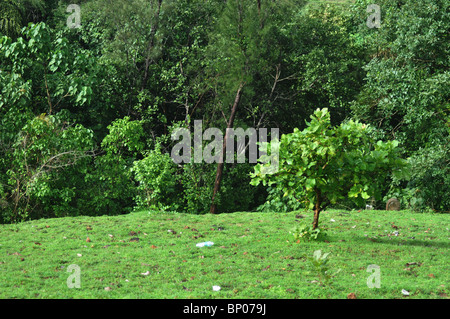 After the heavy rains, nature turns a vibrant green but a plastic bottle reminds you of man-kinds uncaring ways - Stock Photo