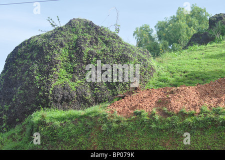 After the heavy rains it is amazing to see grass growing on rocks without soil sustained just by rain water. - Stock Photo
