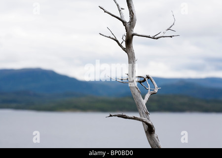 Dried silver tree branch by sea - Stock Photo