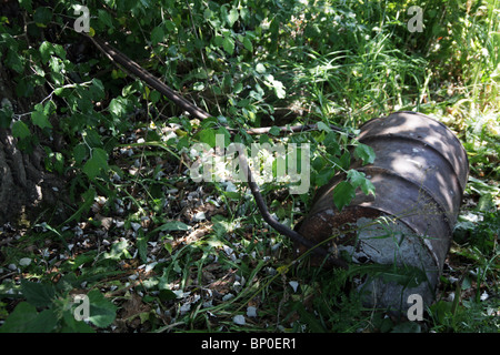 Old metal garden roller sitting abandoned in the undergrowth of an old garden - Stock Photo