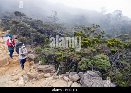 South East Asia, Malaysia, Borneo, Sabah, Kinabalu National Park, Malaysias highest mountain (4095m), female porters - Stock Photo