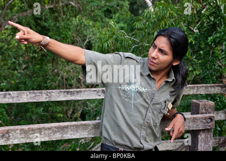 Peru. Jesus, an experienced local guide at Inkaterra Rerserve Amazonica, pointing out birds on the treetop-canopy - Stock Photo