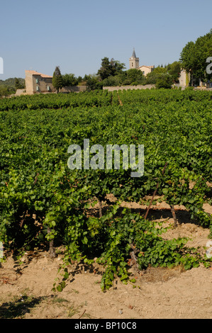 Roadside vineyard & vines in the wine producing village of Beaufort a part of the Herault department in the Languedoc - Stock Photo