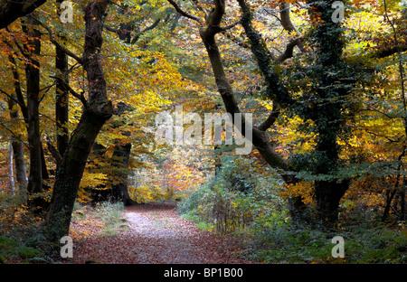 Core Hill Wood, Devon. Woodland Trust wood. November 2007 - Stock Photo