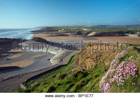 Thrift in flower and breakwater at low tide, Bude, North Cornwall, England, UK - Stock Photo