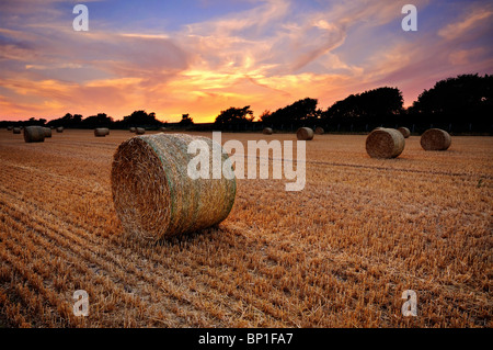 Christchurch Hay Field - Stock Photo