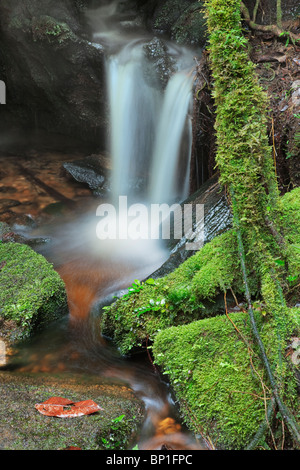 Close up view of small waterfall in Montane Rain Forest with green moss covered rocks. - Stock Photo