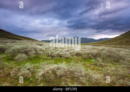 Dramatic clouds and windy conditions in the Ringsdalen valley, Jotunheimen, Norway. - Stock Photo