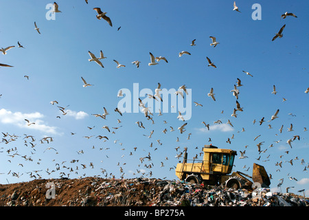 Landfill with bulldozer working, against beautiful blue sky full of sea birds. Great for environment and ecological - Stock Photo