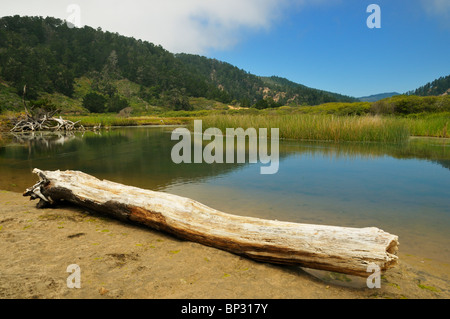 The small creek at the entrance to the Big Basin Redwoods State Park, California, USA - Stock Photo