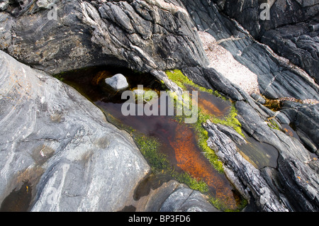 brightly coloured algae in a rock pool on the west coast of Norway - Stock Photo