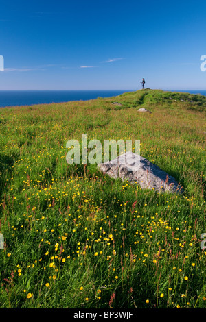 Flowering season at the island Runde on the west coast of Norway. - Stock Photo