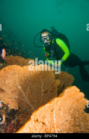 scuba diver & Giant Sea Fans, Underwater Sea Life at Verde Island near Puerto Gallera, Philippines, SE Asia - Stock Photo