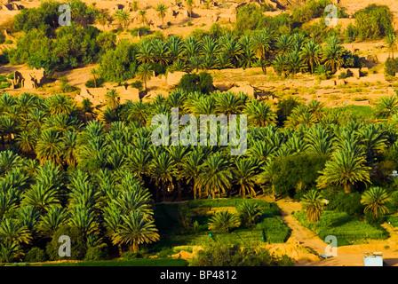 Saudi Arabia, Al-Ula town and oasis, date palm trees - Stock Photo