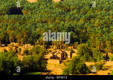 Saudi Arabia, Al-Ula date palm trees in the oasis and old houses - Stock Photo